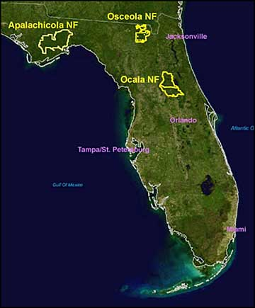Location map of the National Forests in Florida