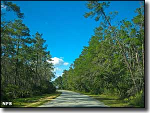 Florida's National Forests