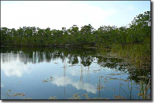 Blue Hole on Big Pine Key, National Key Deer Refuge