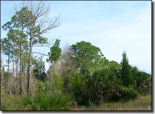 A view at Chassahowitzka National Wildlife Refuge