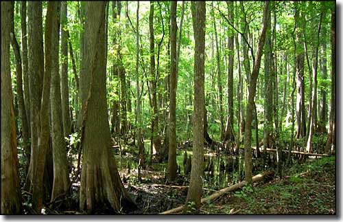 A typical view in Lower Suwannee National Wildlife Refuge