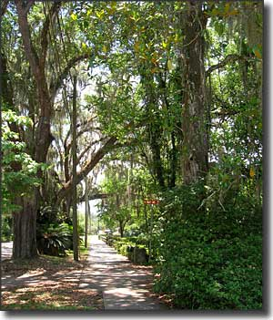 A typical sidewalk scene in Micanopy