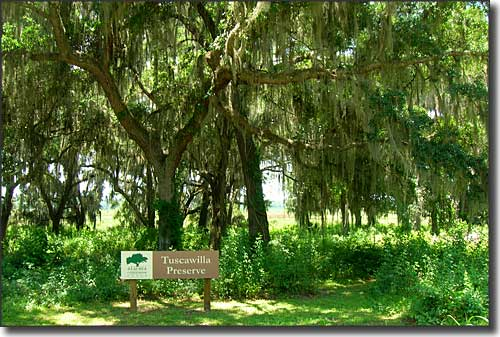 Tuscawilla Preserve, an Alachua Conservation Trust property south of Micanopy