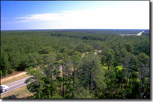 A view of the Florida Black Bear Scenic Byway countryside
