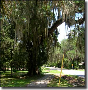 A typical scene along the Old Florida Heritage Highway