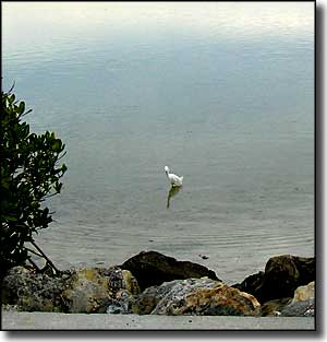 An egret in the water beside the Courtney Campbell Scenic Highway