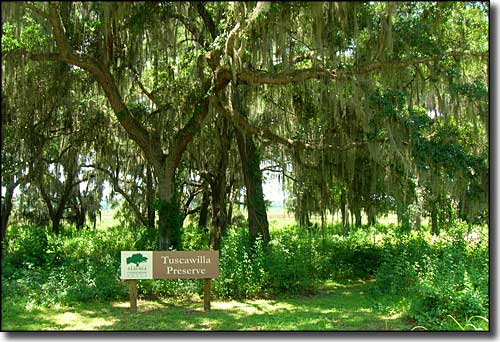 Tuscawilla Preserve, along the Old Florida Heritage Highway