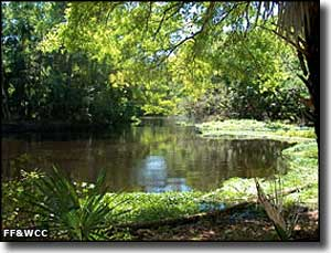 Blackwater Creek on Seminole State Forest