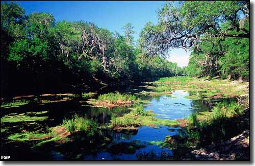 The Suwannee River in early summer