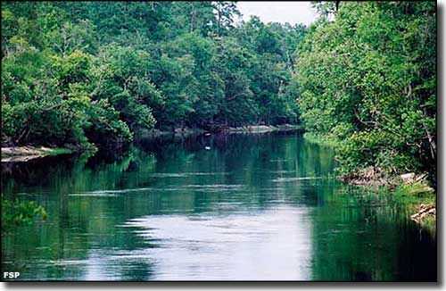 The Suwannee River at Big Shoals State Park in mid-summer