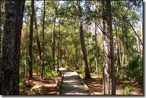 A boardwalk trail in Crystal River Preserve State Park