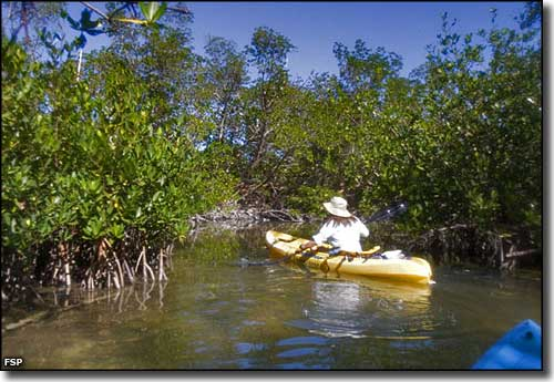 Kayaking in the backwaters of Curry Hammock State Park