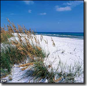 Sea oats at Grayton Beach State Park
