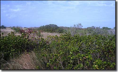 Typical vegetation on Honeymoon Island