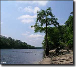 The swimming area on the Suwannee River
