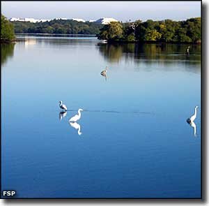 Egrets on Lake Worth Lagoon
