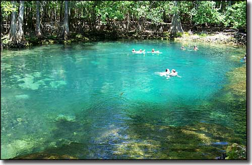 Swimmers in the spring at Manatee Springs State Park