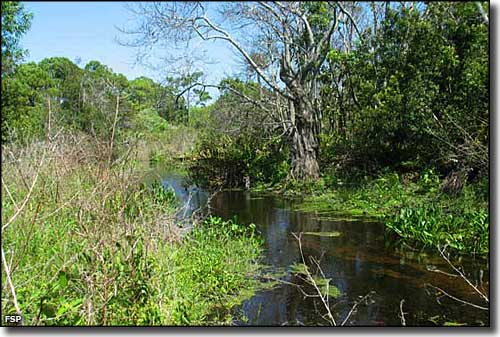 Manatee Creek at Seabranch Preserve State Park