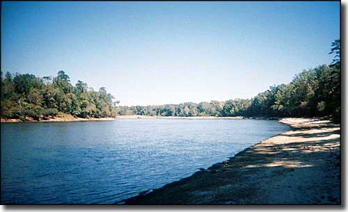 The Apalachicola River at Torreya State Park