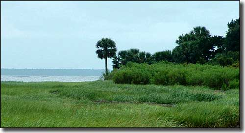 Along the shore on St Marks National Wildlife Refuge