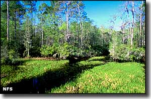 Big Gum Swamp Wilderness