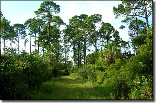 Hiking trail at Cedar Key Scrub State Reserve